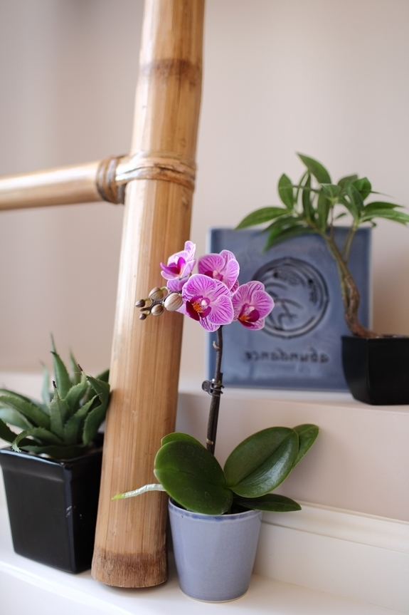 Mini Orchideen Badezimmer Pictures Gallery